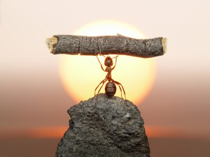 Statue of Labour, ants civilization living because working